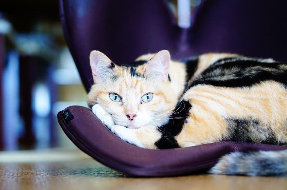 猫撮影レンズ F値1.8