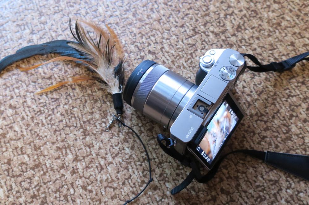 猫撮影レンズ マクロ