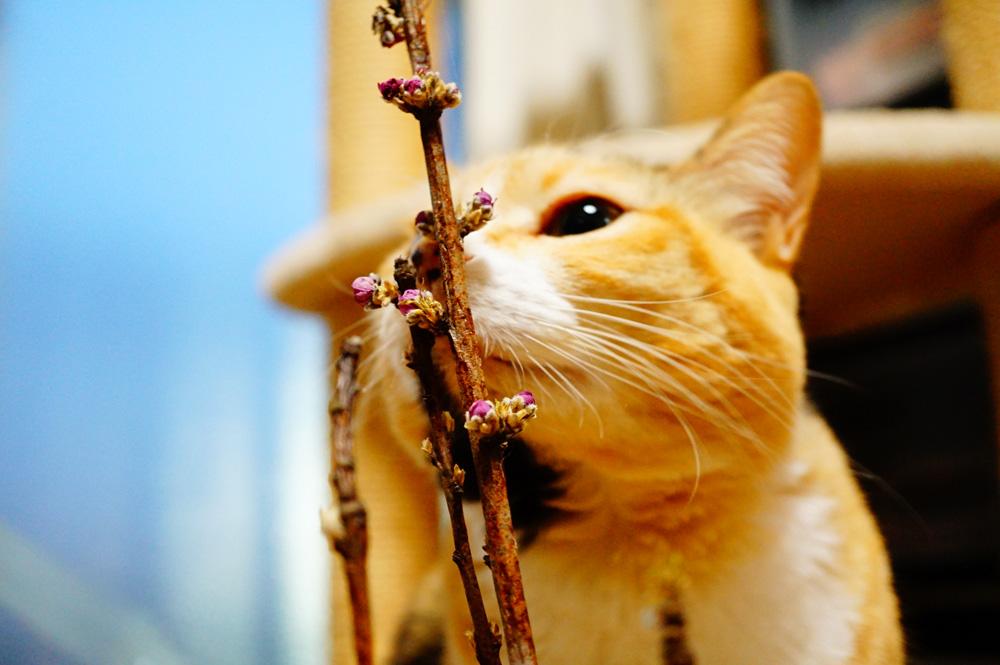 猫 マクロレンズ 撮影