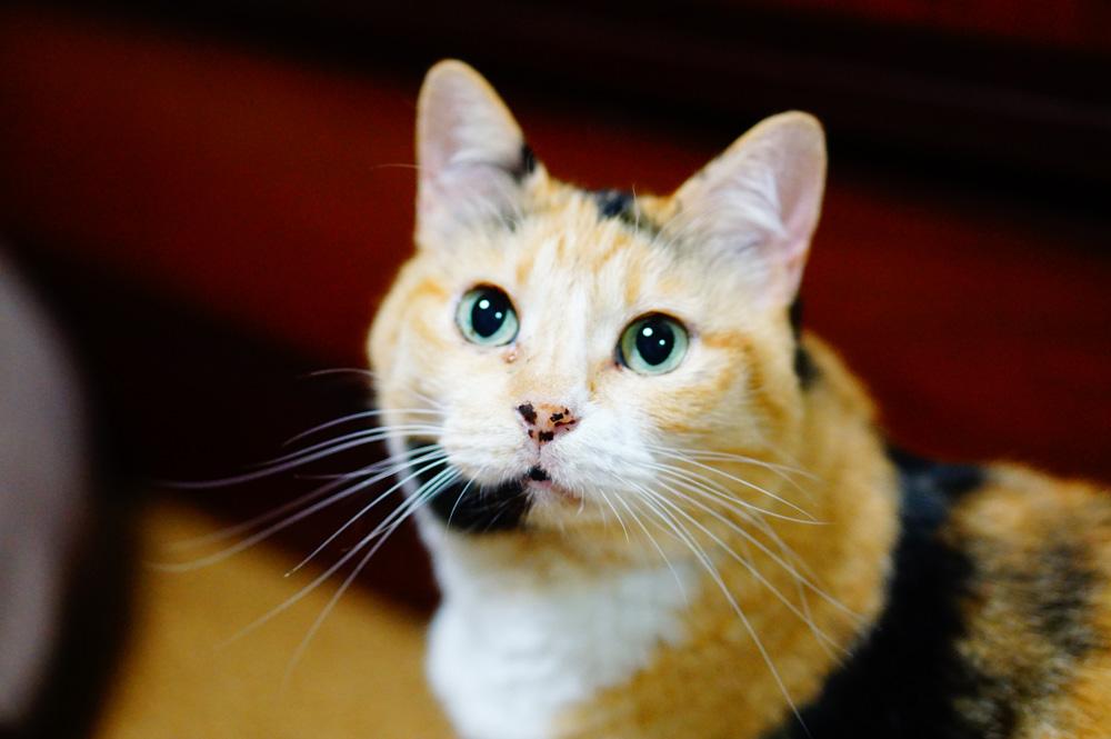 夜に撮った方が猫の黒目は大きくなる