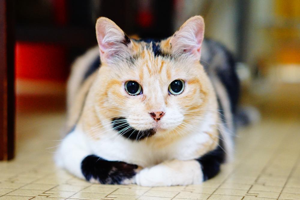 猫の 黒目 を大きく 撮る方法