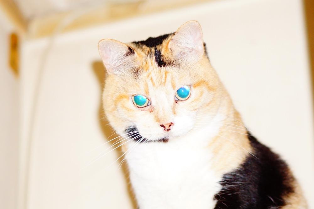 猫の黒目を撮る際の注意