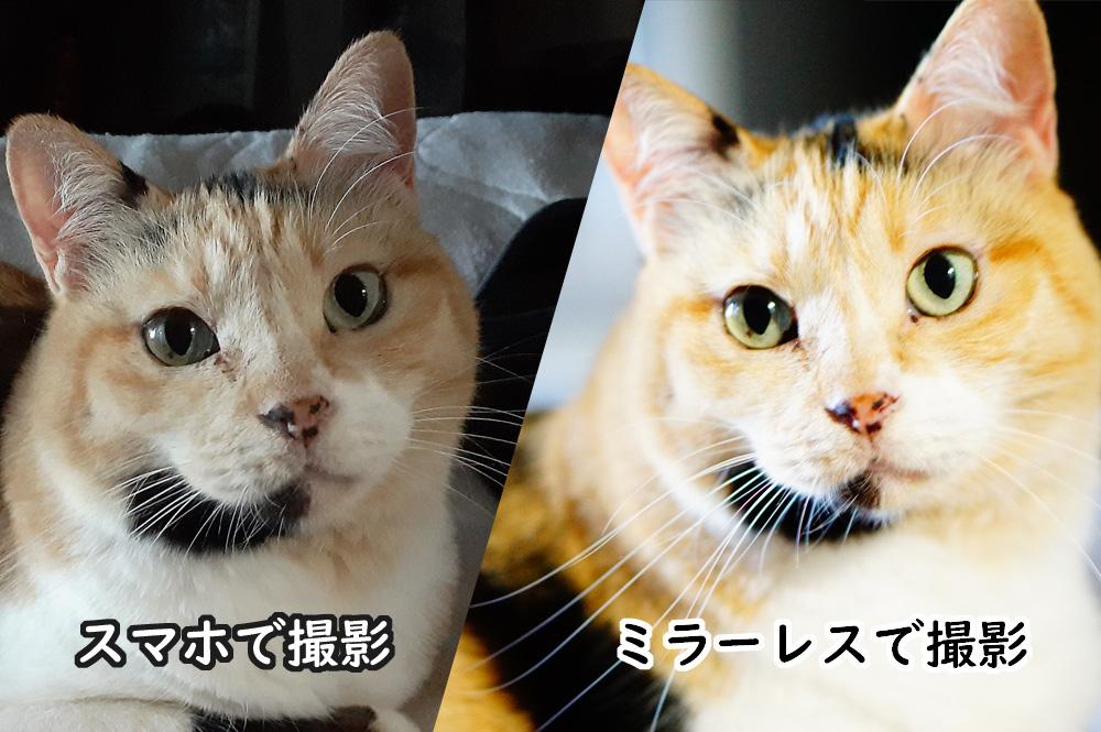カメラの性能による猫の瞳の撮れ方