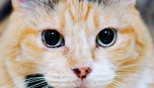 猫の黒めを大きく撮る方法!!【夜に薄暗い場所で撮るのがポイント】