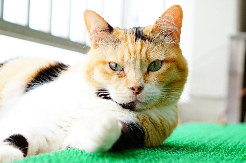 猫の瞳孔は光が強いと細くなる