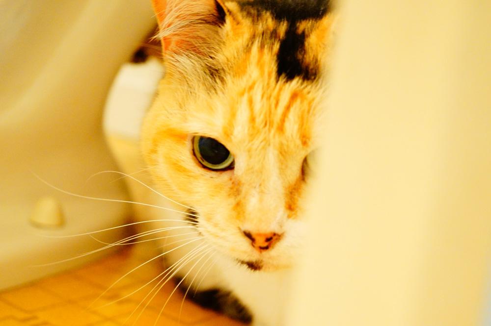 猫の黒目を大きく撮る方法