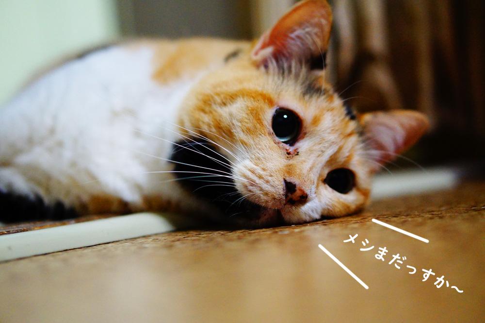 猫 ご飯待ち