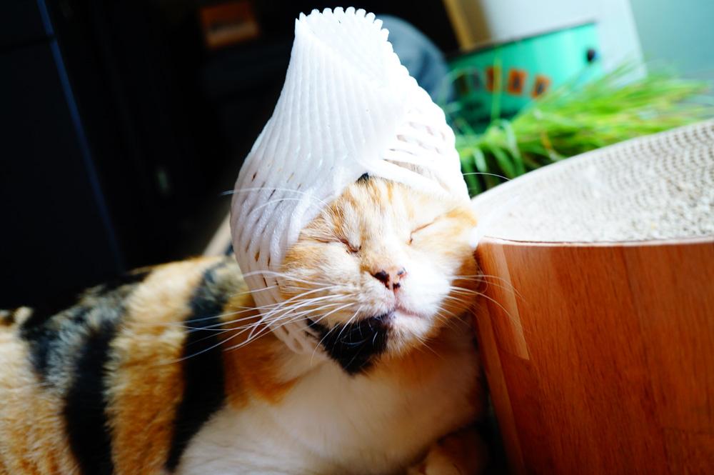 猫 果物ネット