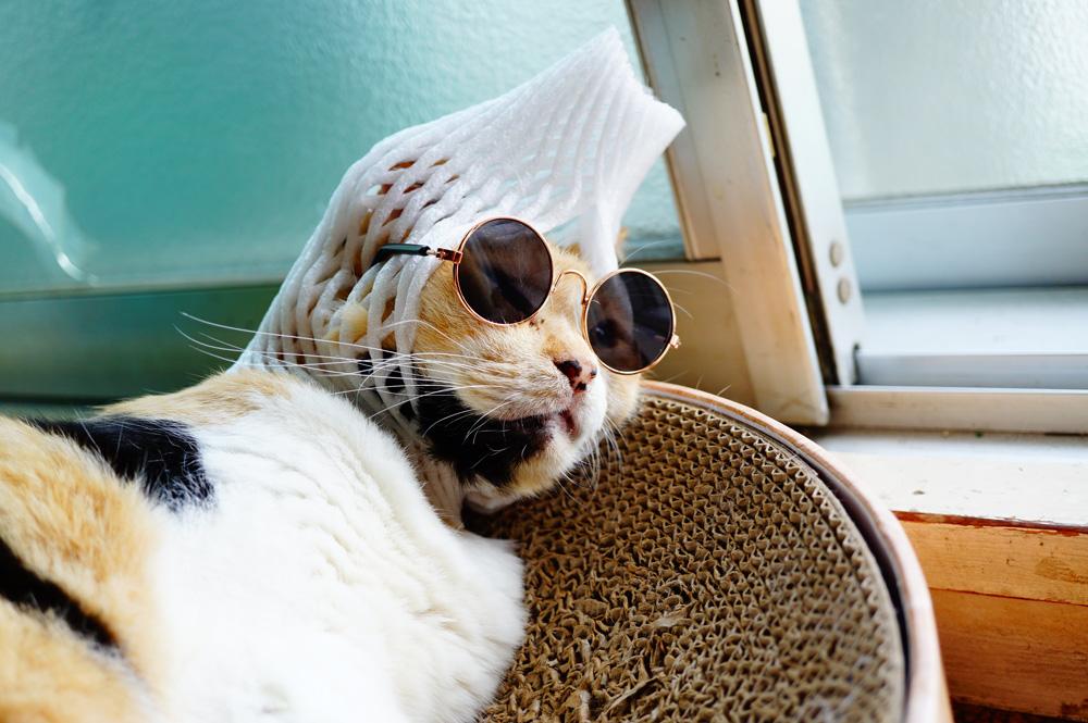 猫用メガネ アマゾン