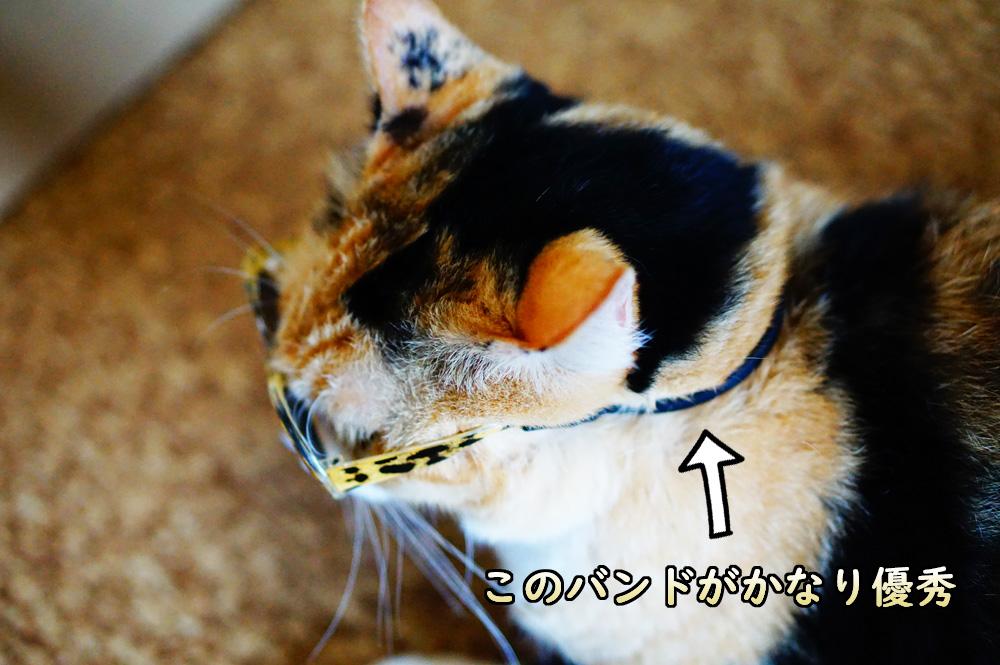 猫用メガネ アマゾンとダイソーの違い