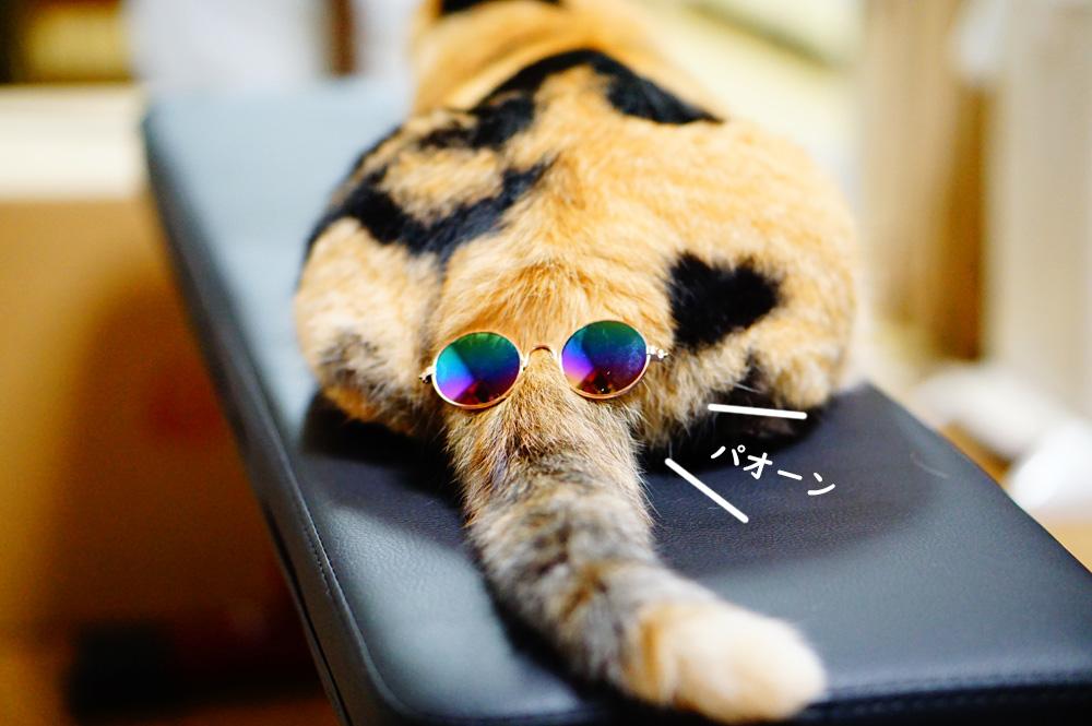 猫用メガネ