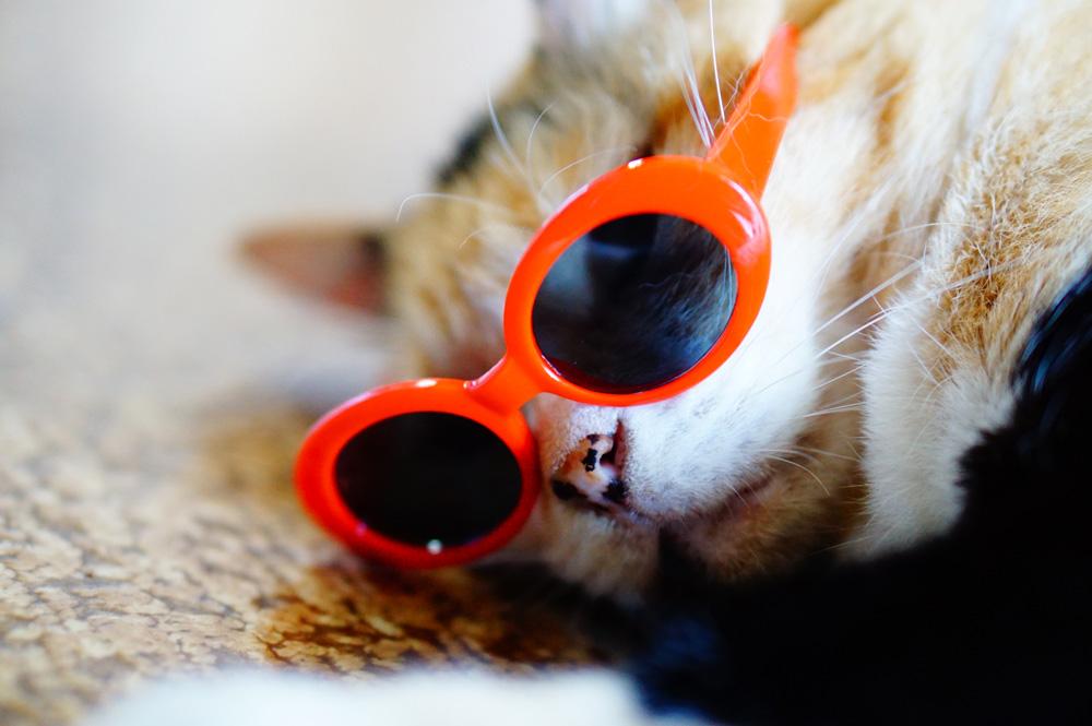 猫用 眼鏡