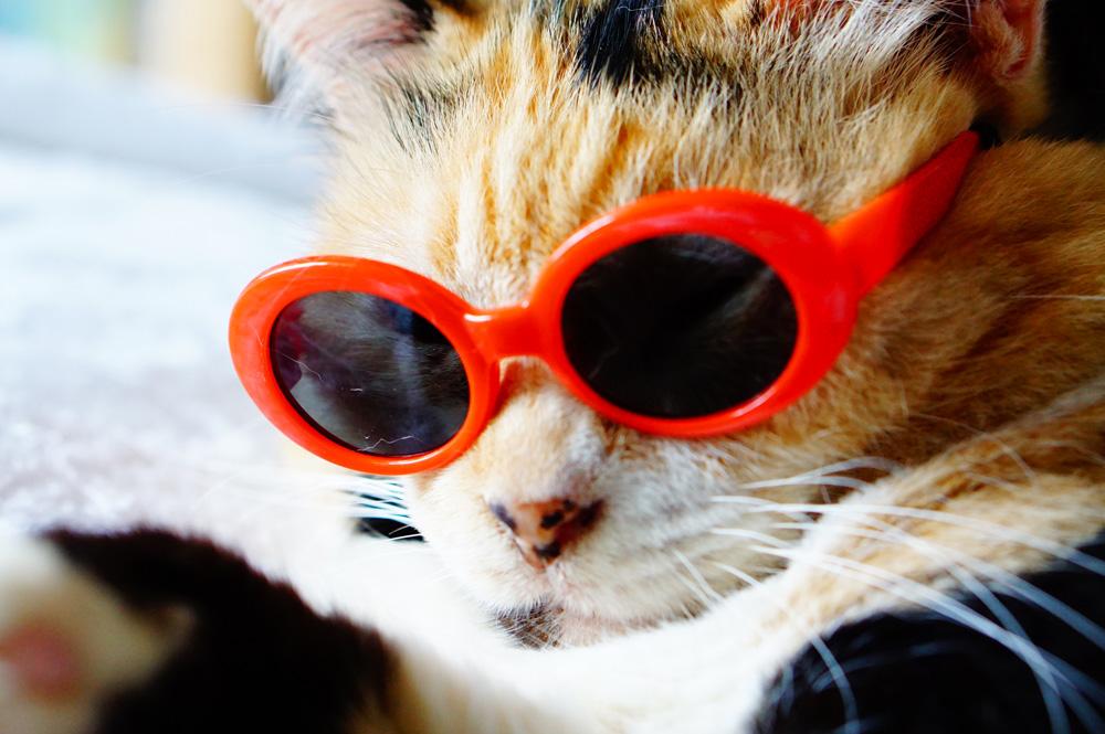 猫用 メガネ
