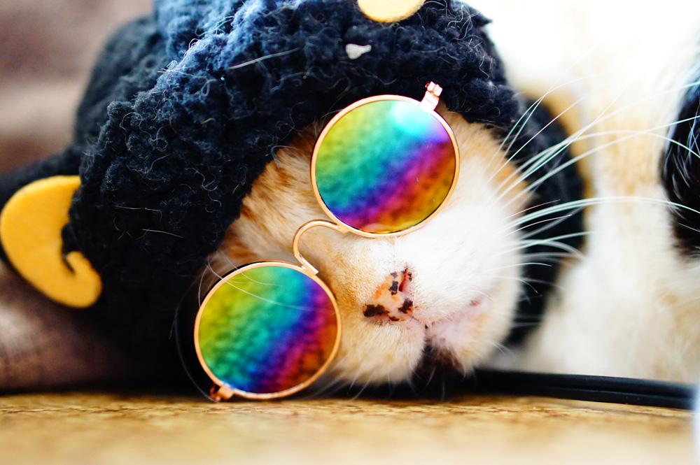 猫用メガネ ダイゾー