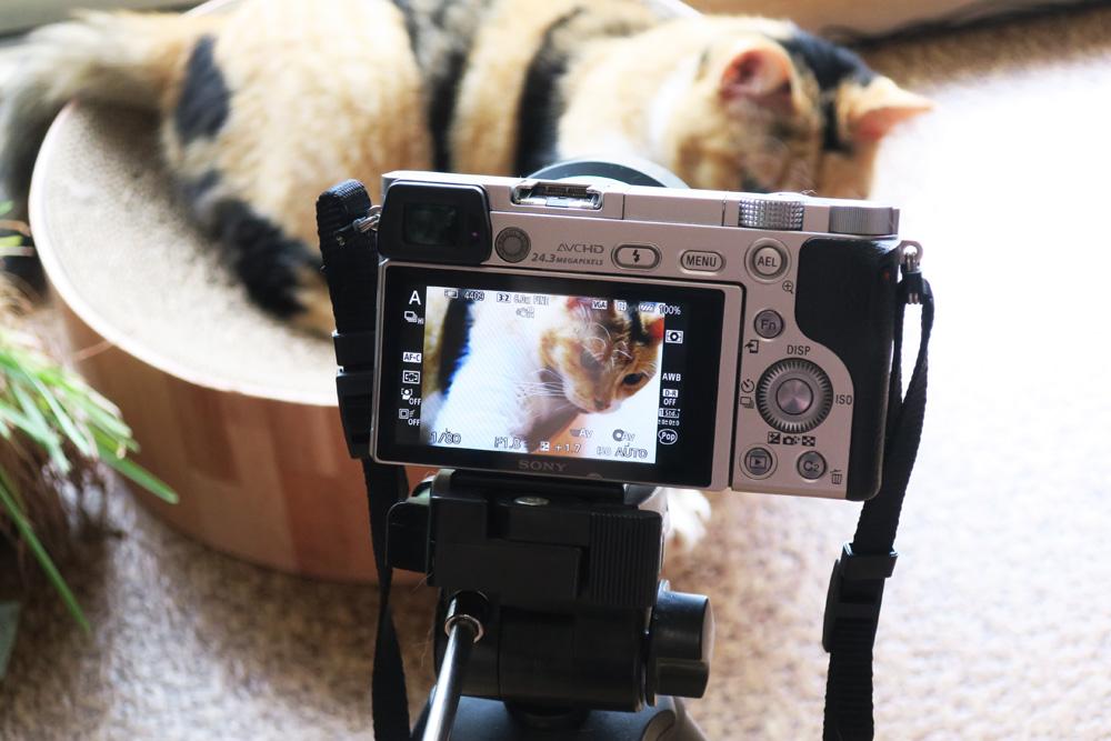 猫を上手に撮る10のコツ