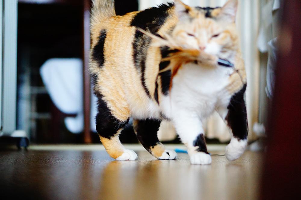 猫撮影コツ 猫の目線から撮ってみる