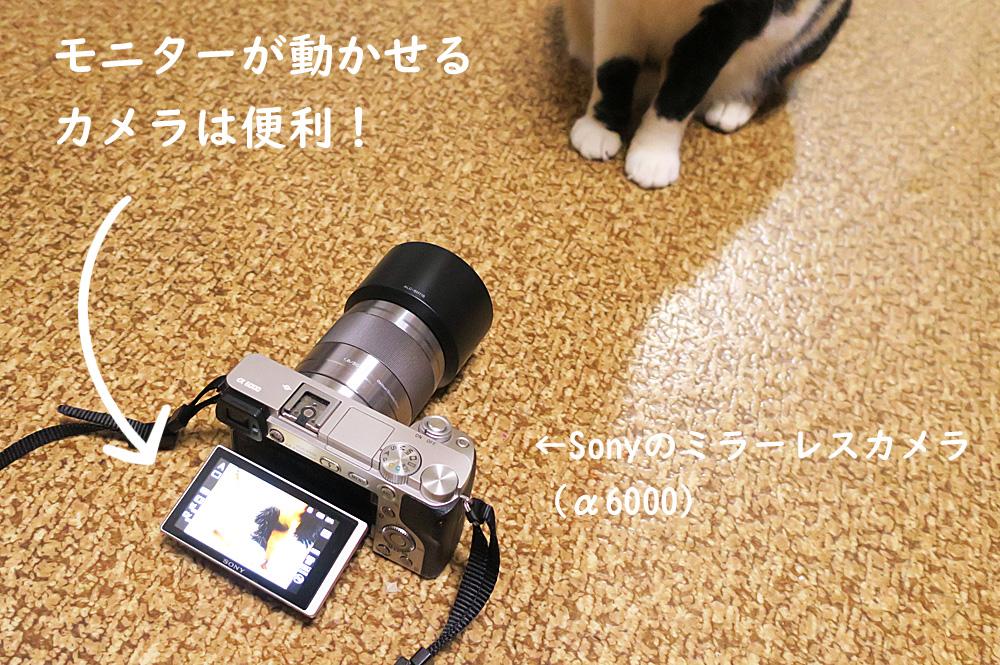 猫撮影コツ モニターが動かせると便利