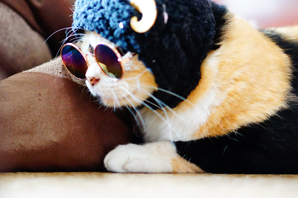 猫撮影コツ 小物を使って猫を撮ってみる