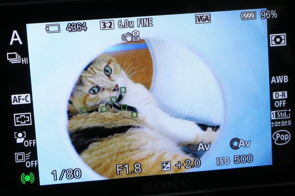 猫撮影コツ AF機能をうまく使う