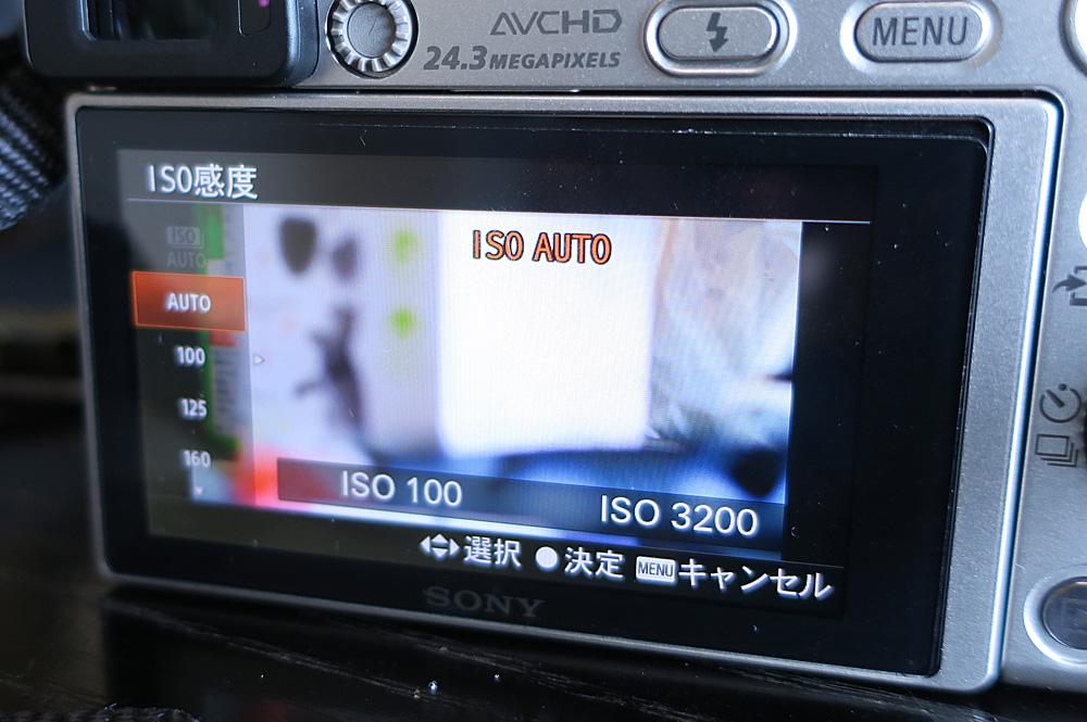 猫撮影カメラ設定 ISO感度の設定はオートでOK