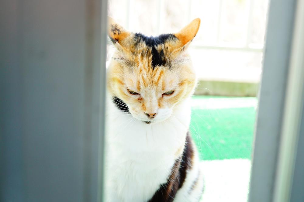 カメラが苦手な猫を撮るには