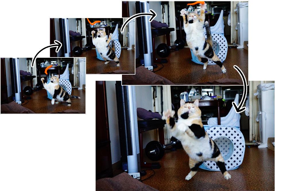 猫撮影コツ 連写して決定的な瞬間を逃さない
