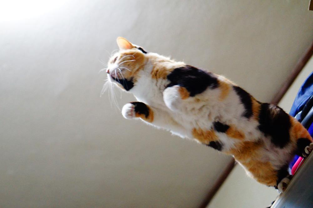 猫撮影コツ シャンプしている時を狙って撮る