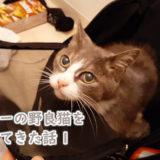 人懐っこいグレー毛色の猫を拾ってきた話1(捕獲編)
