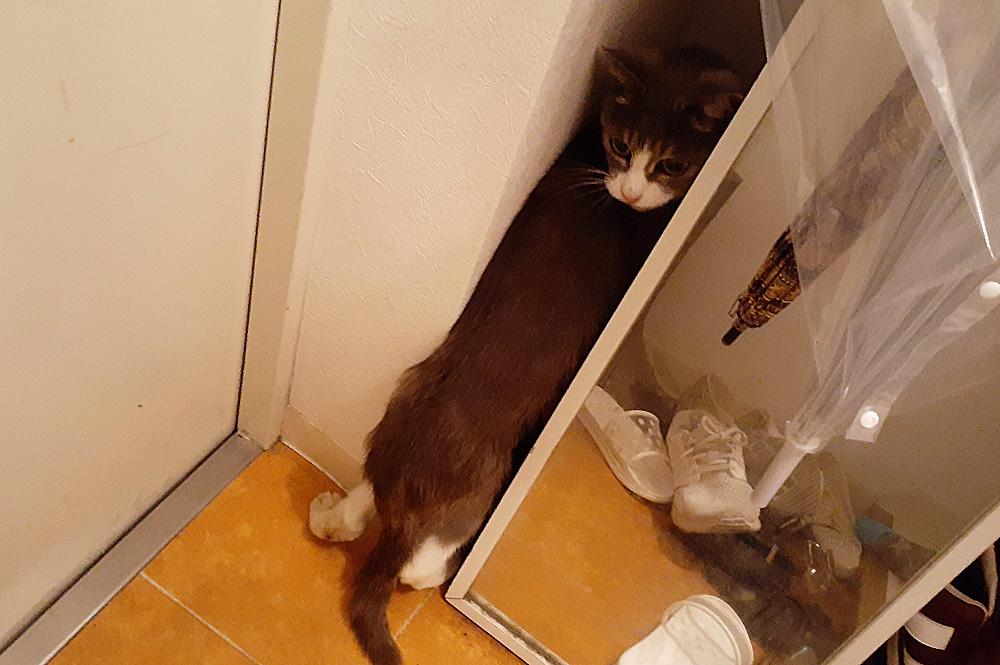 野良猫 初めてのお家