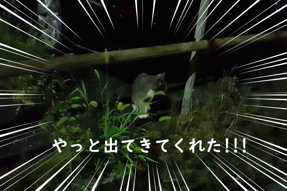 野良猫を捕獲