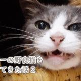 人懐っこいグレー毛色の猫を拾ってきた話2(検査してきた)