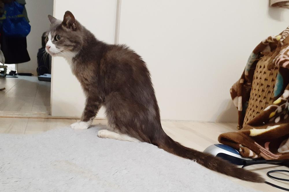 野良猫 ガリガリ