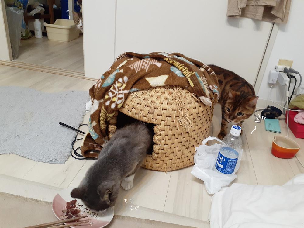 ハイエナハンター猫