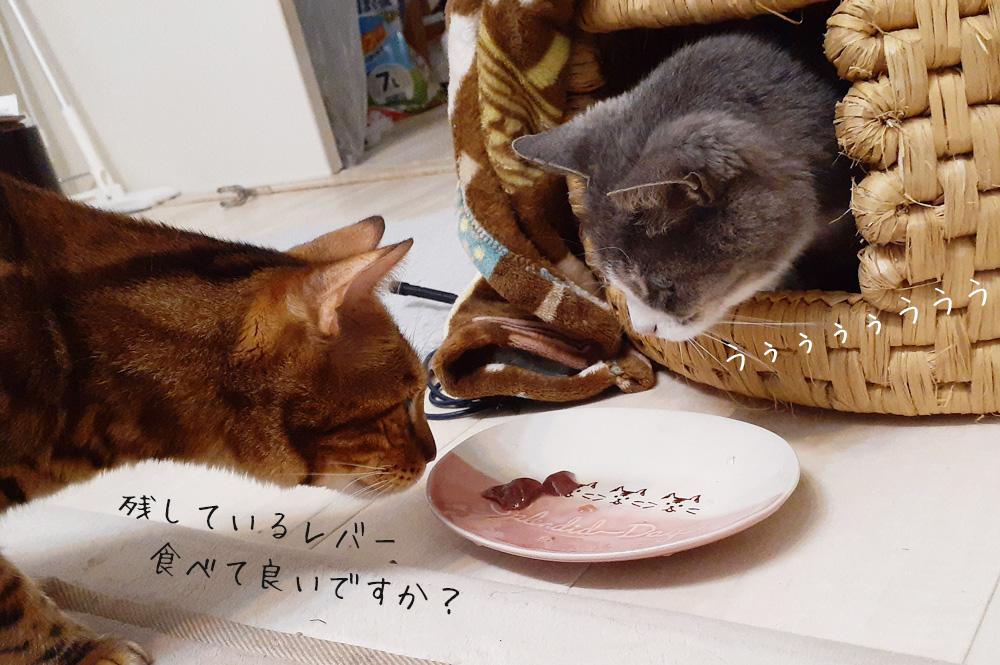 人には優しいのに猫にはケンカ腰
