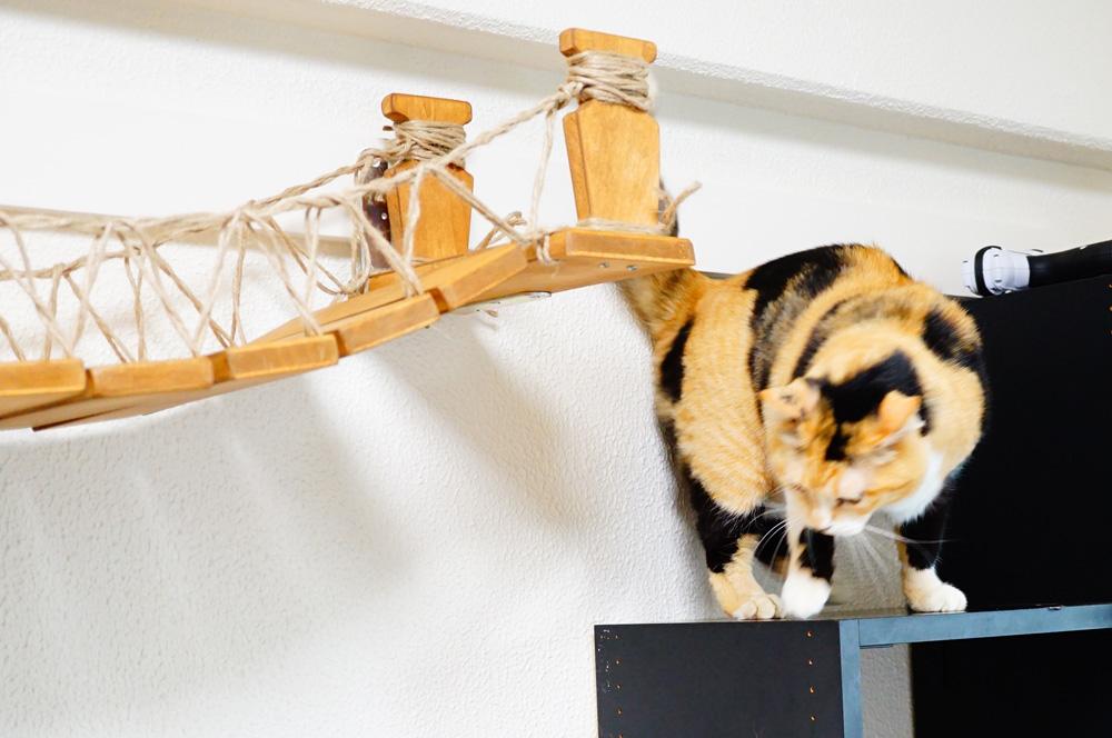 吊り橋を渡ってみた愛猫の反応