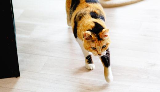 賃貸で猫を飼うなら床材はクッションフロアがおすすめだぞ!