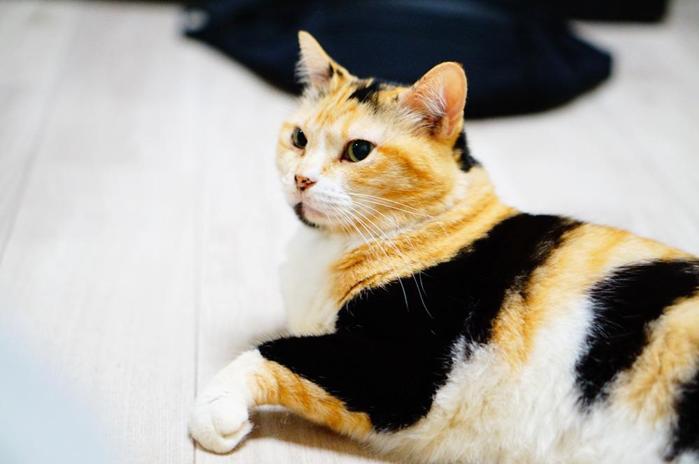 猫におすすめのクッションフロアはどれ?