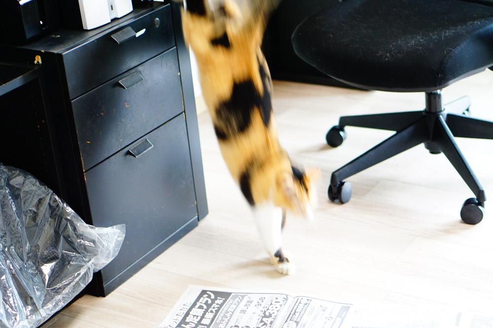 クッションフロア 猫 防音