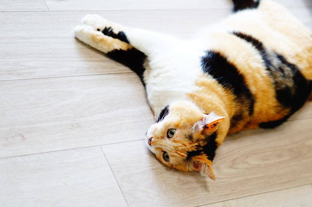 猫 クッションフロア
