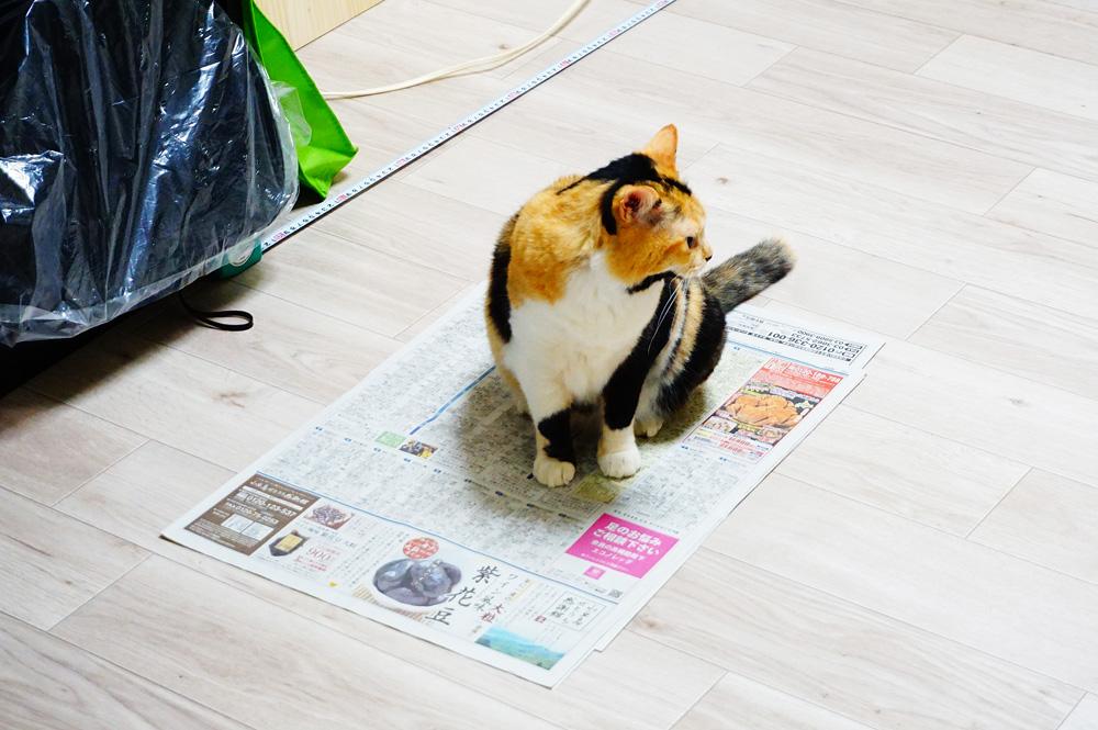 クッションフロア 猫
