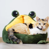 見向きもされなかった猫用クッションベッド(カエル)との戦いに勝利した!