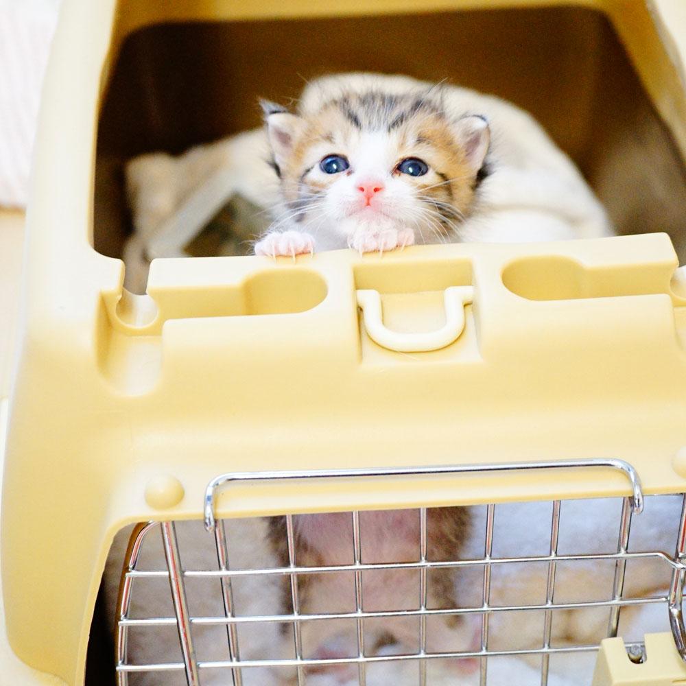 子猫 成長記録 生後18日
