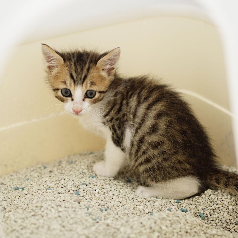 子猫 成長記録 生後42日