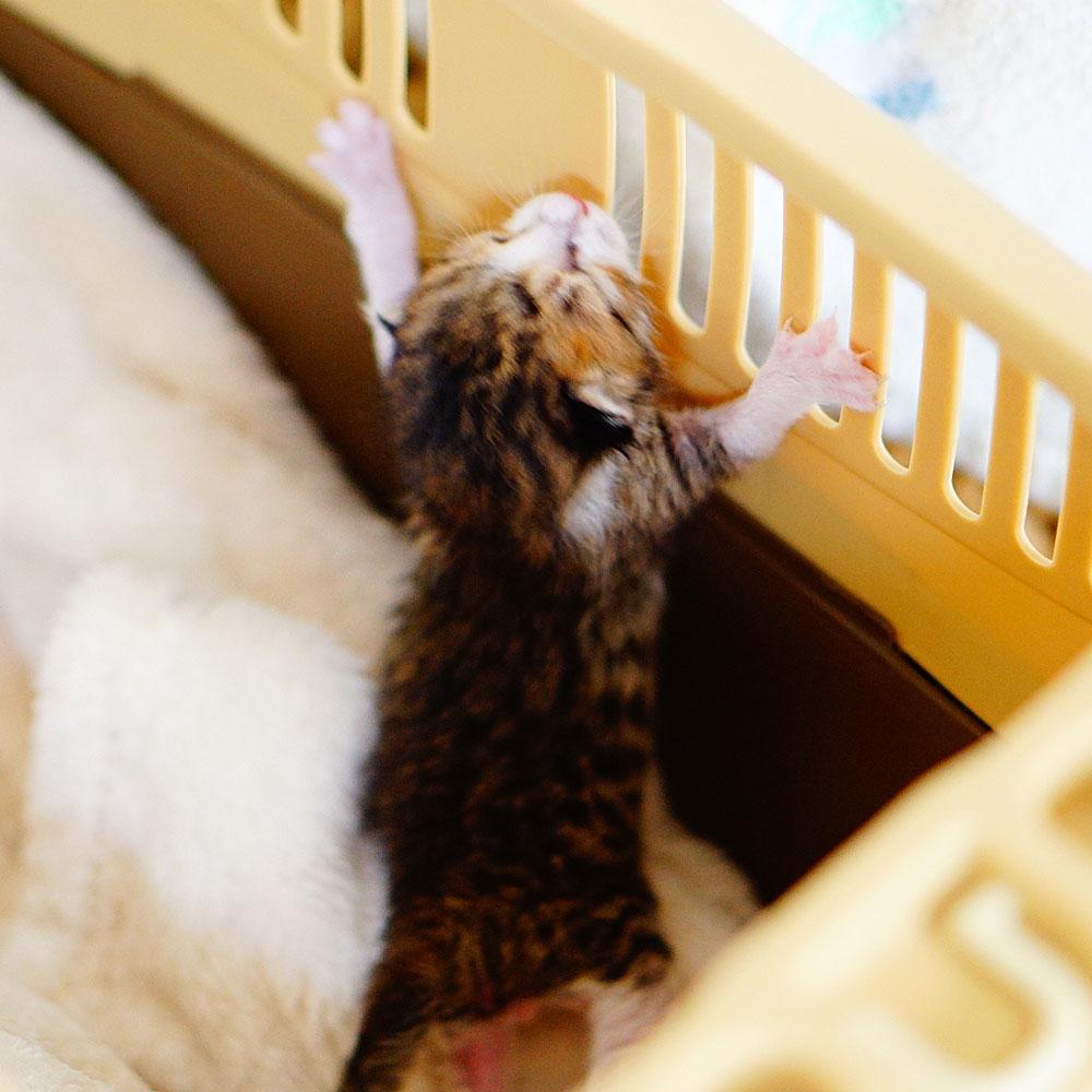 子猫 成長記録 生後3日