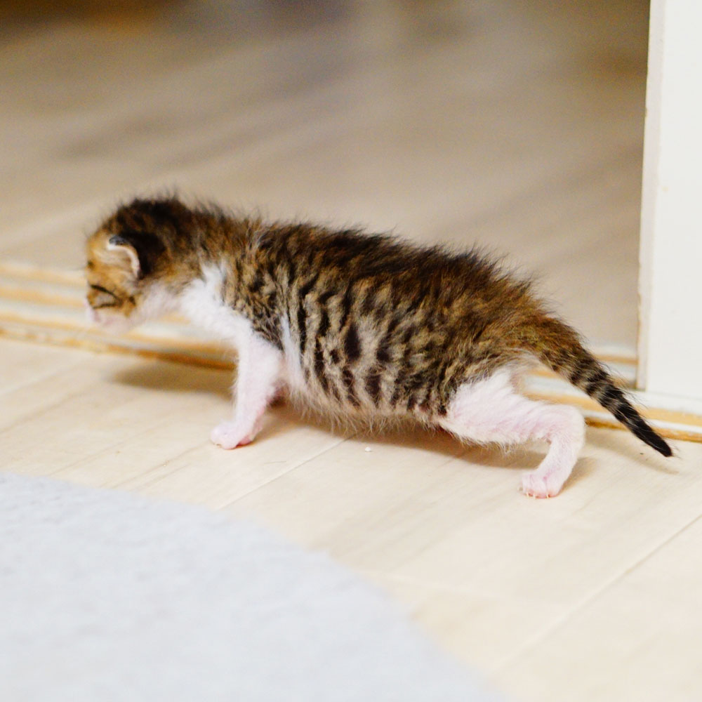 子猫 成長記録 生後17日