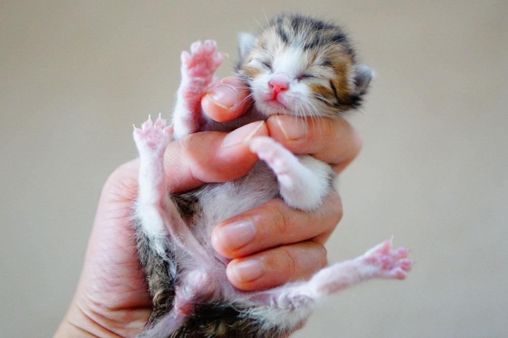 子猫を拾ったらまず動物病院で健康チェック