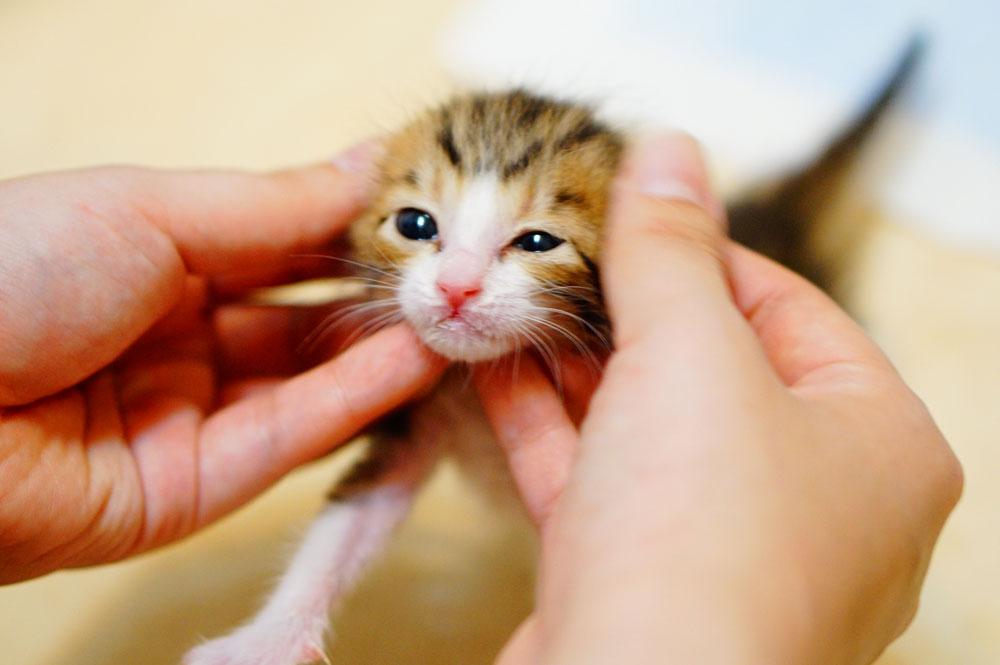 子猫を育ててみて