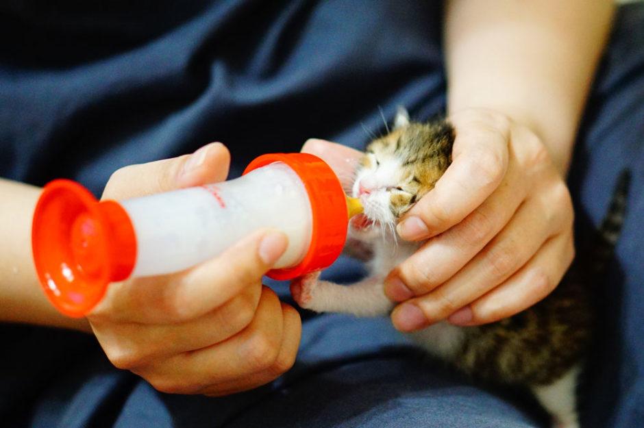 子猫にミルクを飲ませるコツ!飲む量や回数、暴れる際の対策について