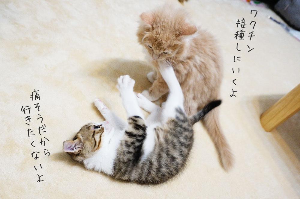 子猫にはワクチンが絶対に必要