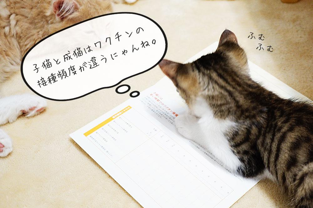 猫にワクチンを接種する頻度と時期